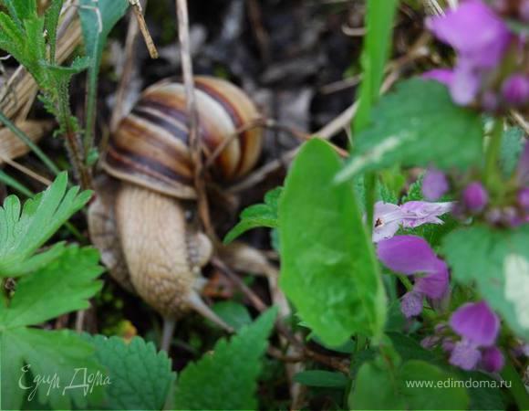 Escargots pour Milady (Улитки для Милены)