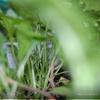 Салат из курицы с руколой первого урожая