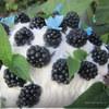 """Торт """"Полянка ежевики с бабочками и мятой"""" для Галиюшеньки;)"""