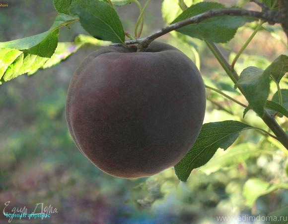 Варенье из черных абрикосов