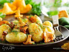 Грибное лукошко: блюда из грибов для всей семьи