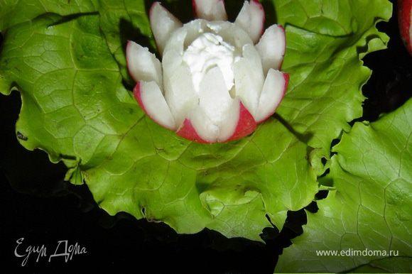 Творожный сыр помещаем в серединку цветов. Цветы устанавливаем на листья салата.