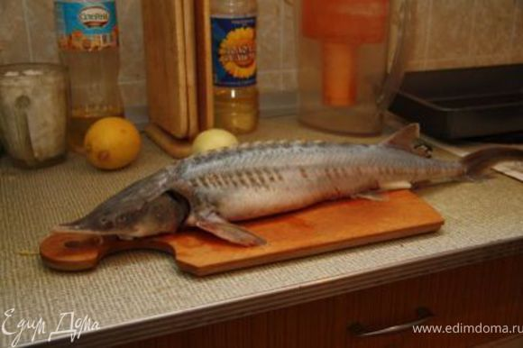 В данном случае использовалась рыбка весом 950 г., т.е. весьма крупная. Моем, потрошим. Чистить осетровые, я вам скажу, дело нетривиальное, а срезать вкуснейшую кожу совсем не хотелось. Использовал способ, вычитанный в интернете: рыбка выкладывается в поддон и пару раз обдается кипятком из чайника. После этого чешуя чистится исключительно.