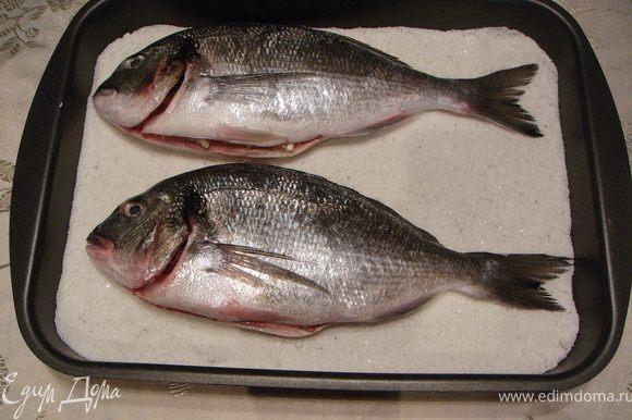На противень высыпать крупную соль (соли должно быть много: покрыть все дно толстым слоем). Сверху выложить выпотрошенную, вымытую и высушенную бумажным полотенцем рыбу.