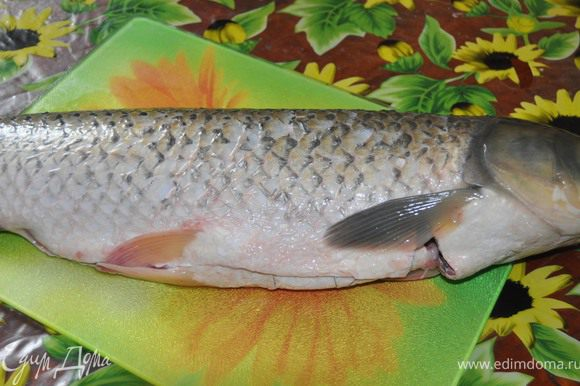 Рыбу помыть, почистить.Голову отрезать,из нее сварим уху.