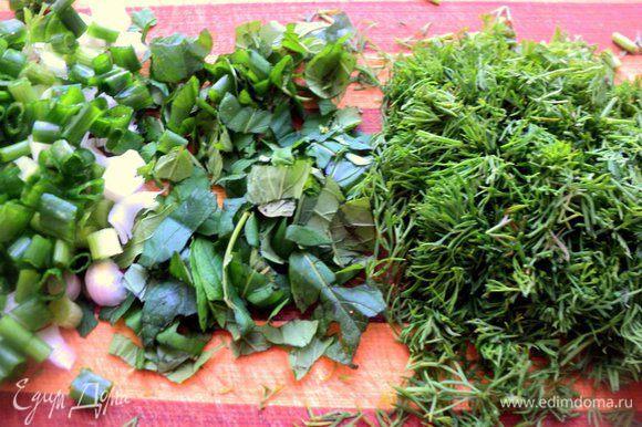 Мелко нарезать укроп, зеленый лук и листики мяты.