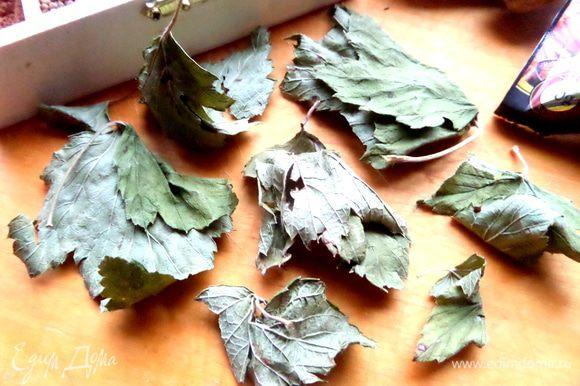 Летом я обдираю смородиновые кусты и высушиваю целиком листья смородины.