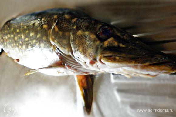 У меня была щука весом 1 кг 600 г. Голову и хвост я оставила на уху. Почистив рыбину и отделив филе от костей, получила около 700 г щучьего филе.