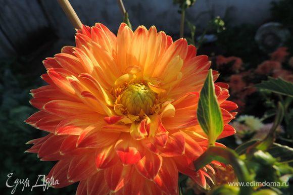А после чае- или кофепития с вафлями приглашаю вас на прогулку в наш летний сад;) http://www.edimdoma.ru/club/posts/17808-tsvetochnaya-feeriya-ili-nemnogo-leta-sredi-zimy