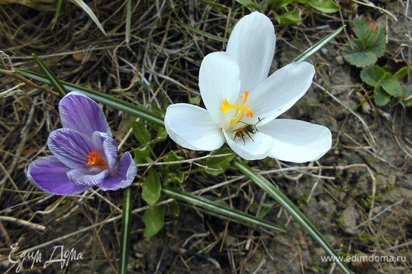 Кусочек весны из нашего палисадника))