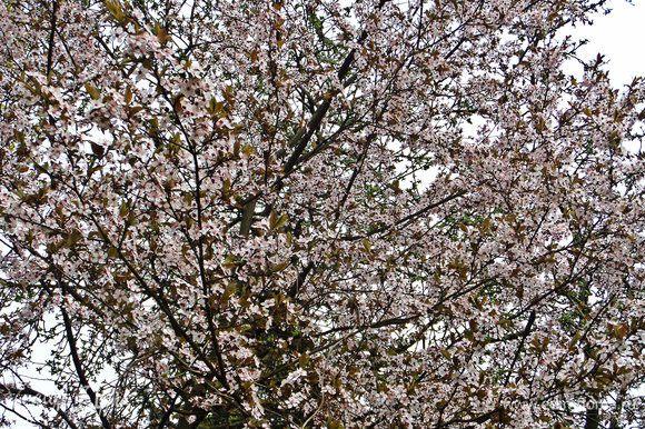 Немного весны, которую так долго ждали!