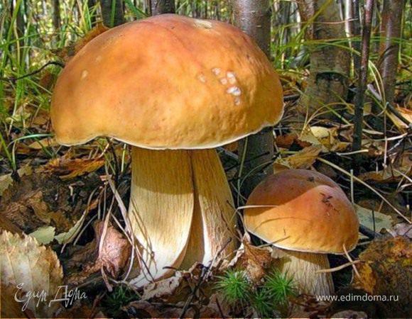 Салат слоёный с лесными грибами