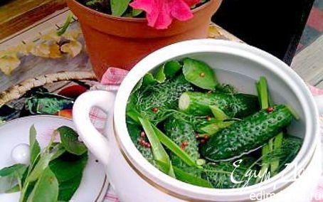 Рецепт Малосольные огурчики
