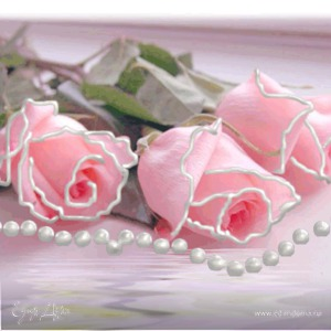 amina.rosa