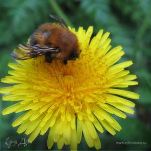 пчёлка-врединка