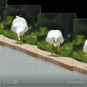 Seagullina