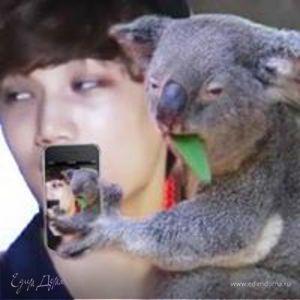 Dumby Koala