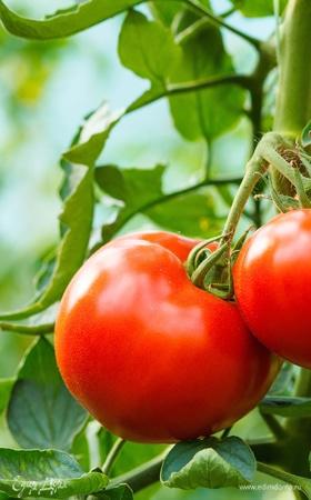 День помидора в Минусинске (Красноярский край)