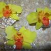 Орхидея из мастики МК