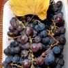 """Виноградное желе """"Осенняя прохлада"""""""