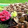 "Шашлык ""грибы в сметане"""