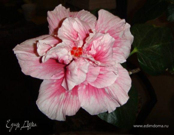 Цветы в доме и в саду
