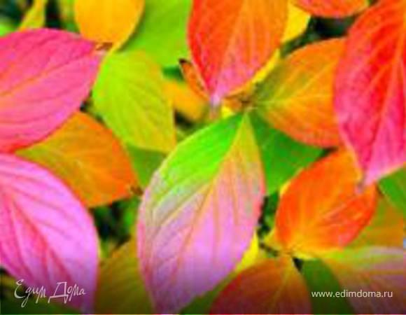 Картинки с наступлением осени