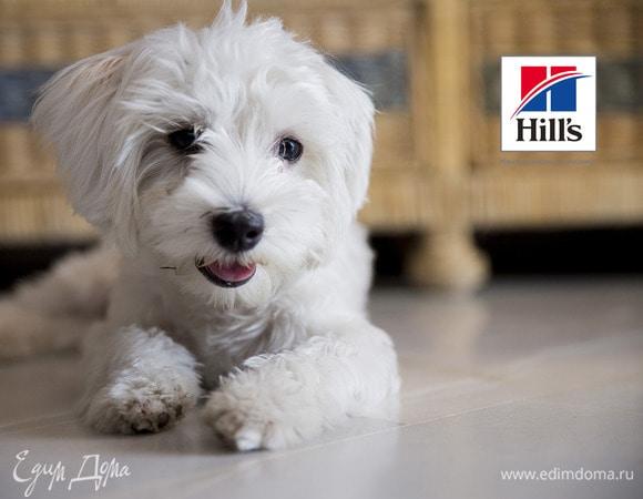 Чек-лист: как правильно кормить собаку мелкой породы