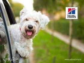 Чек-лист: как подготовиться к появлению собаки в доме
