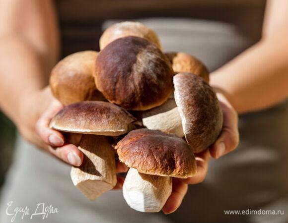 Дары леса: как засолить белые грибы на зиму