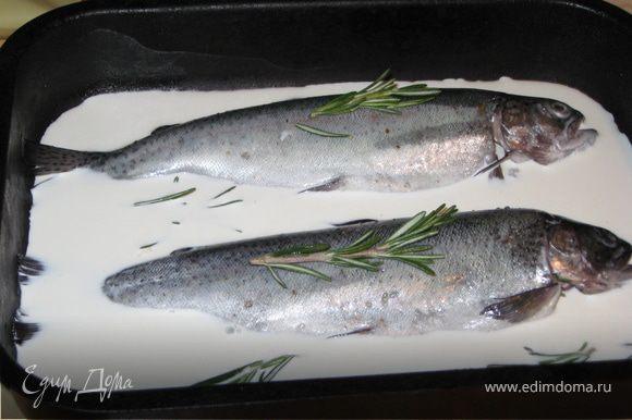 Выложить в форму для запекания, залить сливками (лить сбоку, а не сверху на рыбку), приправить розмарином и отправить в духовку на 40 минут