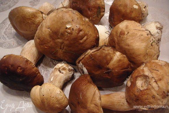 Отобрать наиболее крупные белые грибы.