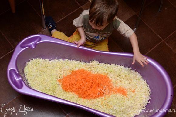 Шинкуем капусту как обычно, морковь трем на терке (я использую кухонный комбайн). Моркови кладите сколько нравится, мы любим класть побольше - она полезная и красиво получается.