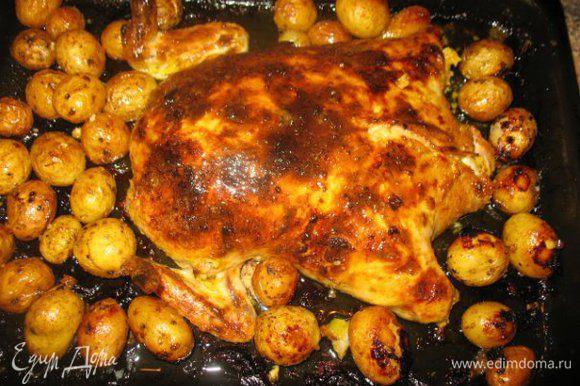 разогрела духовку,поставила курицу где то на 1час при темпер.180-200гр.,периодически полевая маслом....