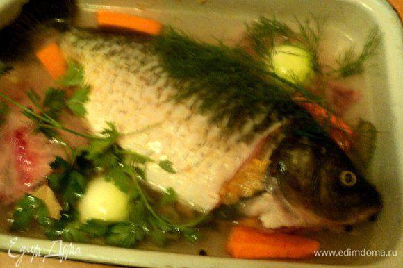 Нафаршировать кожу и голову карпа фаршем, придав карпу вид целой рыбы. Положить рыбу в сотейник, добавить хребет карпа, морковь и лук, порезанные крупными кусками, гвоздику, черный перец, лавровый лист, сахар, зелень. Залить водой, чтобы покрывала рыбу, посолить. Накрыть сотейник крышкой, поставить в духовку. При температуре 180 градусов томить 1час 20мин. Готового карпа охладить в бульоне.
