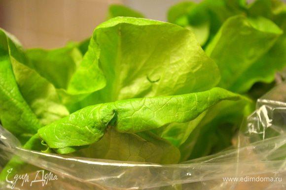 листы салата вымыть и обсушить