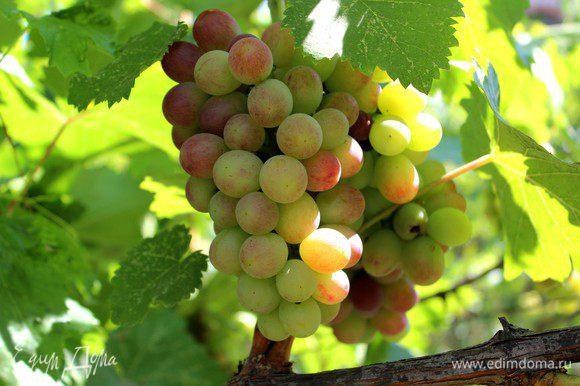 Света! Желаю тебе успеха в битве и дарю тебе гроздь этого солнечного винограда на удачу))))))))))))))