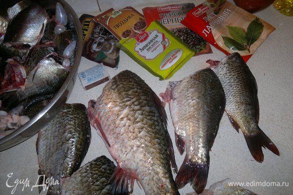 Рыбу вымыть, очистить от шелухи, выпотрошить, отрезать головы.