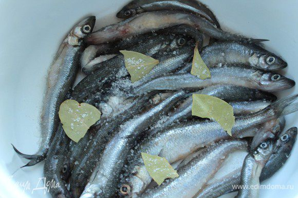 Смешать соль и сахар. Часть рыбы выложить в один слой на дно эмалированной кастрюли, посыпать смесью соли и сахара.