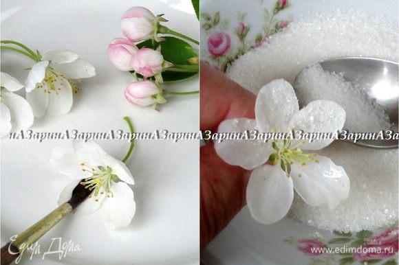 Для украшения, я использовала соцветия яблони, но это могут быть любые съедобные цветы. Белок немного взбить вилкой, что бы легче было обмакивать кисть. Поверхность цветов и листиков покрыть белком и тут же обсыпать мелким сахаром. Дать соцветиям подсохнуть.