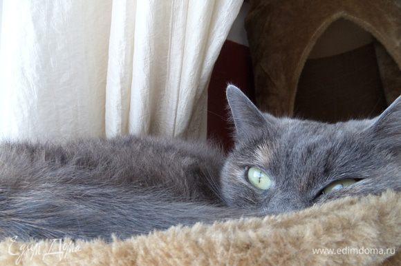 Младшая кошечка Ксю (по-домашнему Ксюня), отдыхает в гамачке, но за всем следит.