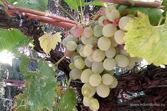 Виноград помыть, разобрать на небольшие веточки. Я брала виноград зеленый и черный.