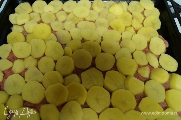 Выкладываем на противень (предварительно смазанный подсолнечным маслом) слоями вначале фарш, потом картофель.