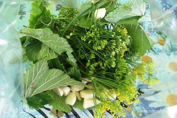 В плотный пакет насыпать зонтики укропа, лист смородины и хрена, очищенный и нарезанный крупно чеснок.