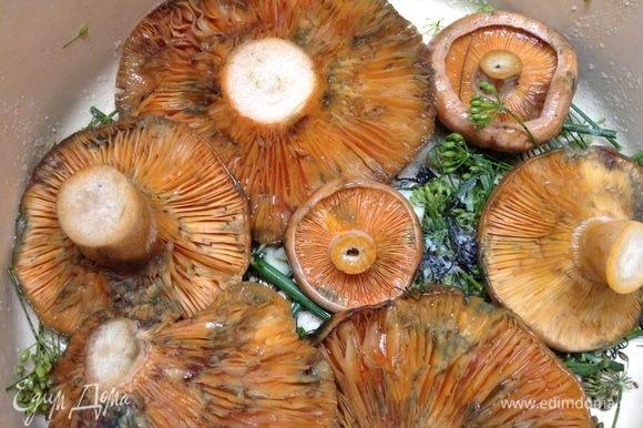 На дно кастрюли, в которой будем солить и под гнет на сутки ставить, укроп положили, чеснока чуть покрошили и хрена, посолили чуть. По соли, к слову, расход такой — на каждый слой грибов тонким слоем. Примерно 50 грамм (пару с горкой столовых ложек) уходит соли на 1 кг грибов. Рыжики (как и любые другие грибочки) укладываем в один слой вниз шляпками, солим.