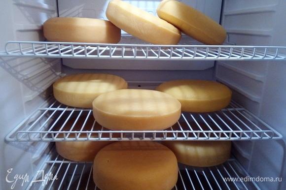 Это мой российский сыр и две гауды (те, что остались на созревании). После посолки промокните влагу с сыра бумажным полотенцем, затем поместите сыр в контейнер (на дно контейнера положить дренажную решетку и дренажную сетку) или в специальный холодильник для созревания с температурой 12–15°C и влажностью 85–90 %. У меня специальный холодильник для вина. Он с вентилятором и нужной температурой для сыров (+12). Влажность я поддерживаю с помощью контейнера с водой. В течение первых дней необходимо высушить корочку сыра: переворачивайте его 3 раза в сутки, чтобы он сох равномерно. После того как корочка высохла, переворачивайте сыр 1 раз в день ежедневно, если сыр созревает в контейнере. Или еженедельно, если сыр созревает в специальном холодильнике, то в течение всего срока созревания. В процессе созревания на сыре может появиться налет из белой плесени — это нормально. Просто сотрите его салфеткой, смоченной в легком соляном рассоле, либо в уксусе. Я делаю слабый раствор соли: 1 стакан кипяченой воды + 1 чайная ложка соли. Самое главное — выдержать два месяца созревания, чтобы ощутить весь вкус сыра.