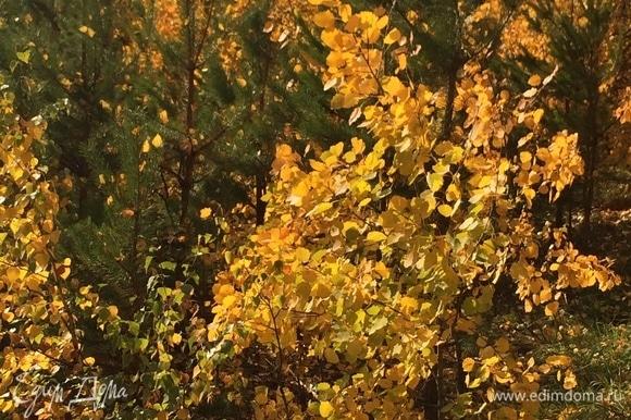 Лес укрепляет иммунитет солнцем, яркими красками и своими плодами.